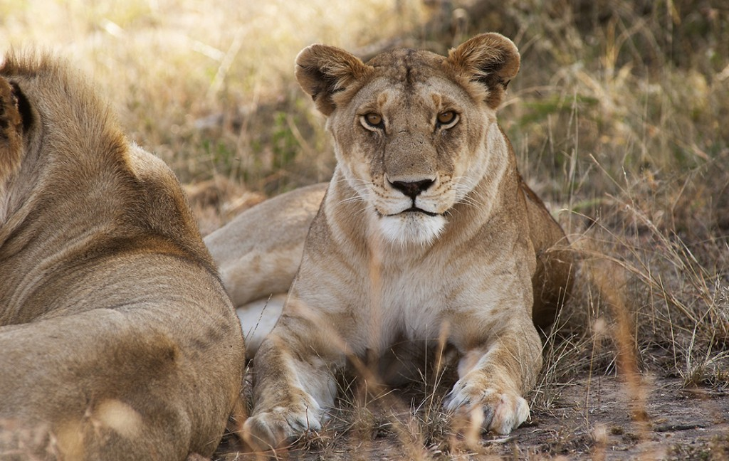 A safari honeymoon in Tanzania