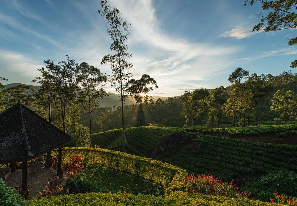 Ceylon Tea Trails in Hill Country, Sri Lanka